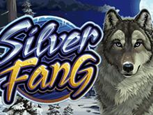 Реальные выплаты для счастливчиков с Silver Fang