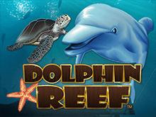 Автомат в казино на деньги Dolphin Reef